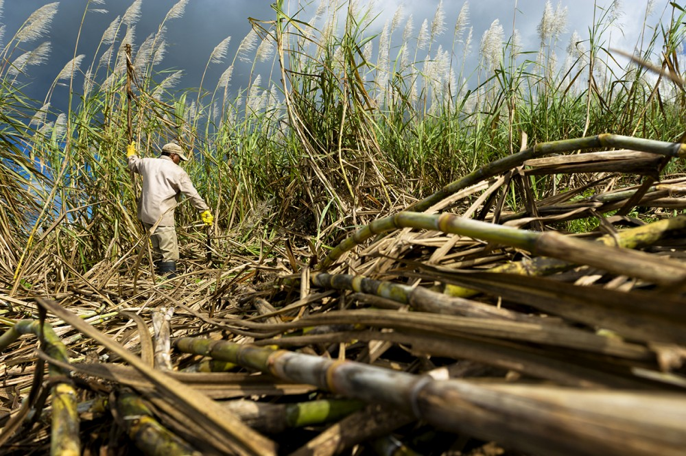 Elected leaders have failed sugar industry