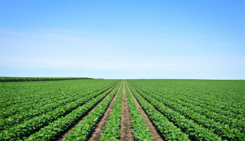 Does Kenya really have a working agricultural policy?
