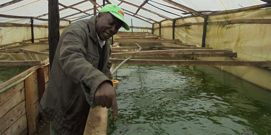 Filling our food gaps with fish farming