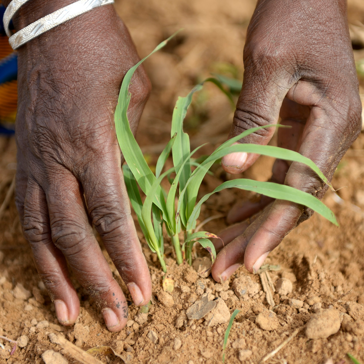 Africa commits to doubling agricultural productivity as development partners pledge Sh1.8 trillion to increase food security